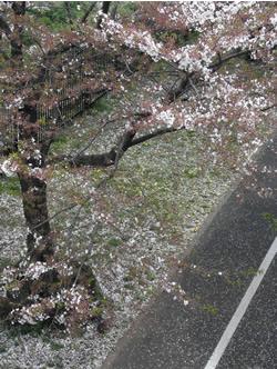 070415_spring_street_c.jpg