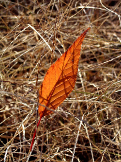 051218_floating leaf.JPG
