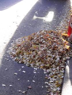 051220_fallen_leaves.JPG