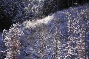 060122_white_trees.JPG