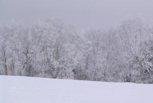 060301_snow_forest.JPG