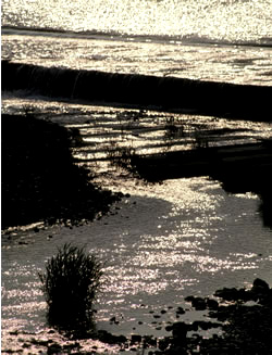 060329_light_stream.JPG