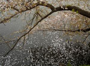 060405_fallen_leaves.JPG