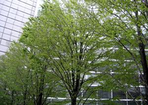 060411_urban_green.JPG