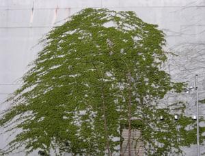 060420_tree.JPG