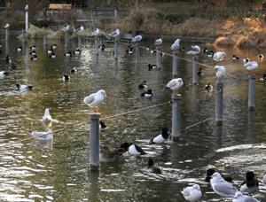 060509_waterfowls'_paradise.JPG