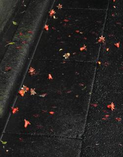 060617_fallen_flowers.JPG