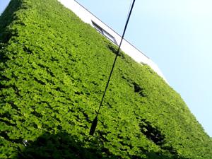 060619_green_wall.JPG