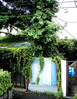 060722_jungle house.jpg
