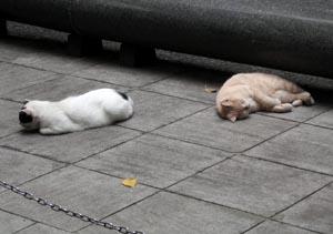 060726_boiled_cats.JPG
