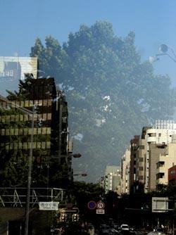 060803_illusive_tree.JPG