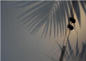 061006_palm_tree.jpg