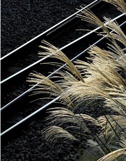 061014_silver_grass.jpg