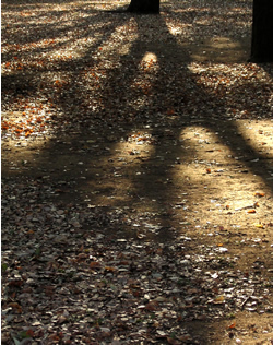 061021_long_shadow.jpg