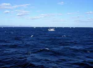 061030_ferry_b.jpg