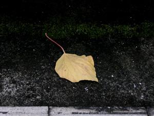 061119_fallen_leaf.JPG