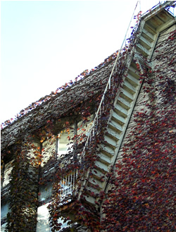 061122_ladder.jpg