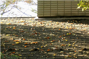 061124_roof.jpg
