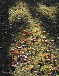 061125_fallen_leaves.jpg