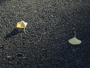 061125_twin_leaves.jpg