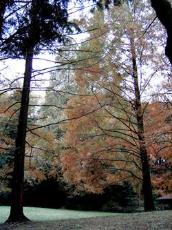 061130_autumn_colors.jpg
