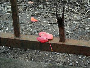 061201_fallen_leaves_b.jpg