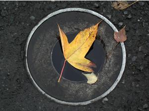 061201_fallen_leaves_c.jpg
