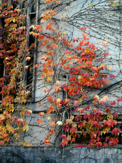 061204_red_leaves.jpg