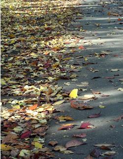 061206_fallen_leaves_b.jpg