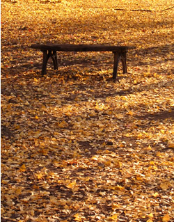 061206_fallen_leaves_d.jpg