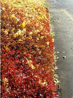 061217_trees_lining_a_street.jpg