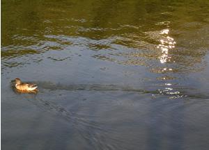 061223_duck.jpg