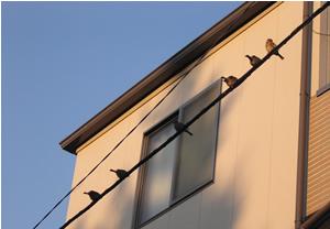 070205_sparrows.jpg