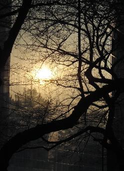 070206_forest.JPG