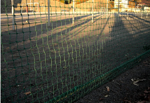 070211_long_shadows.jpg