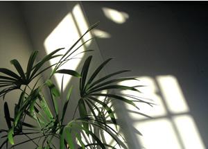 070304_green_plant.jpg