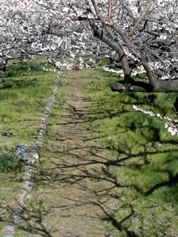070314_path.jpg