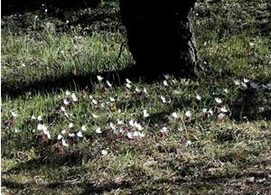 070316_floating_flowers.jpg