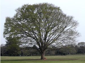 070414_big_tree.jpg