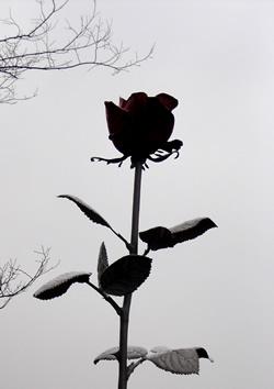 070416_rainy_rose.jpg
