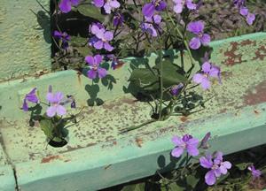 070513_flower_vase.jpg
