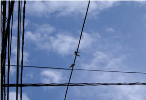 070613_swallows.jpg