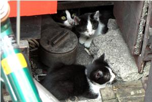 070629_cats.jpg