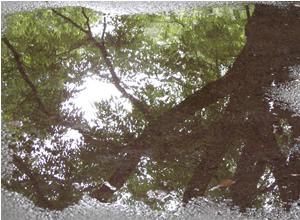 070630_sudden_rain.jpg