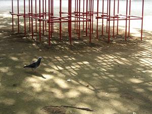 070725_pigeon.jpg