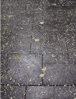 070730_fallen_leaves.jpg