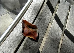 071020_fallen_leaf.jpg