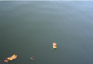 071031_floating_leaves.jpg