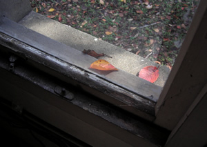 071116_old_window.jpg