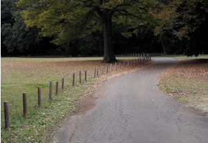 071117_autumn_path.jpg